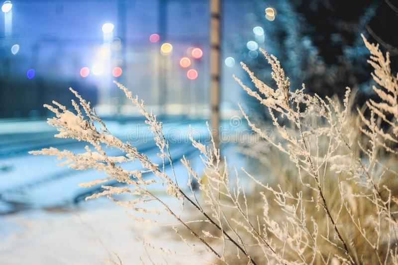 Close-up of Frozen Plants at Night stock photo