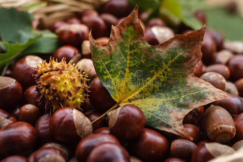 Close-up of Fruits on Field during Autumn stock images