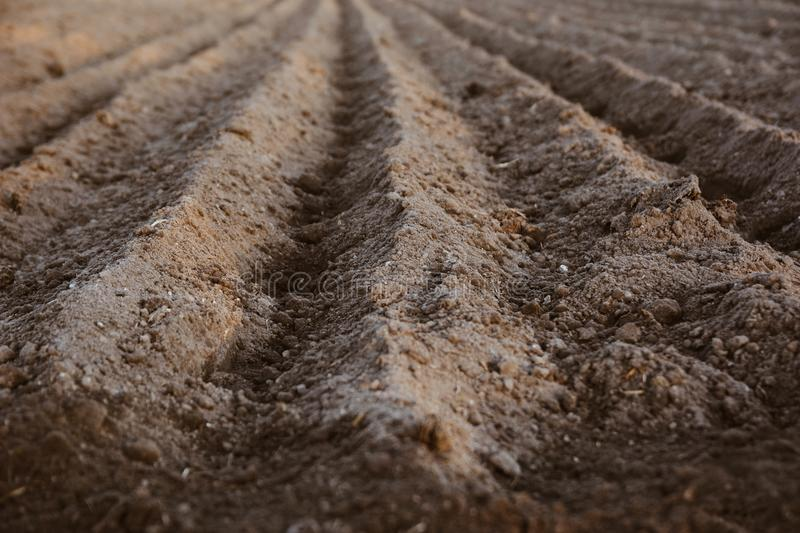 Close up of furrow rows with potatoes just planted in organic field. Organic farming. royalty free stock photography