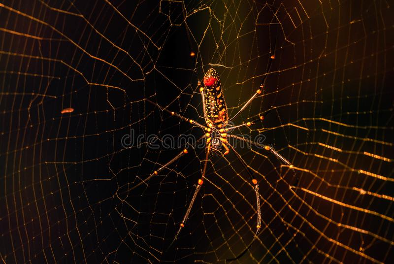 Close up of Garden spider Araneus on web stock images