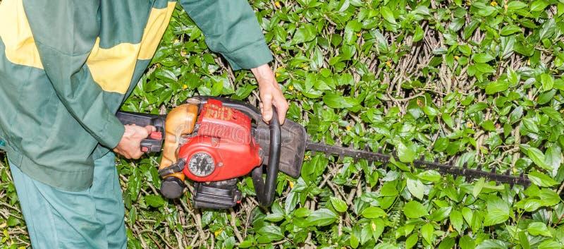 Close up Gardener use hedge trimmer machine for gardening. Close up the Garderner use hedge trimmer machine for gardening royalty free stock images