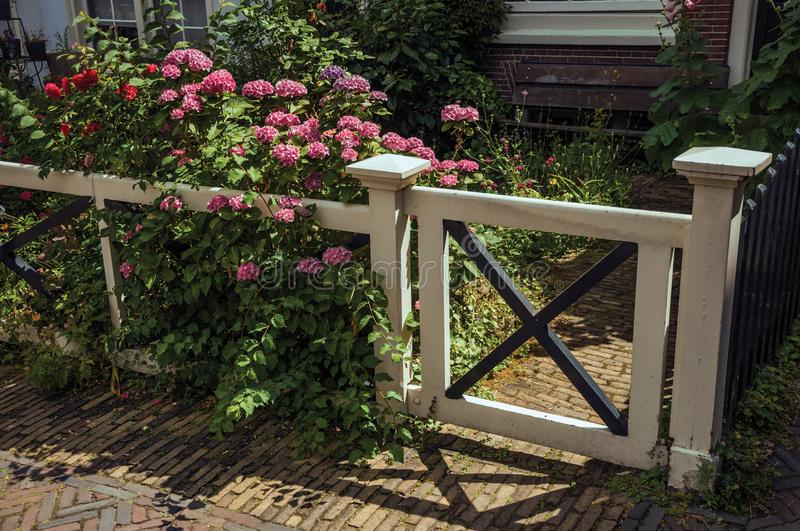 Close-up of gate and wooden fence with flowery garden in front of house on the Begijnhof in Amsterdam. Famous for its huge cultural activity, graceful canals royalty free stock photo