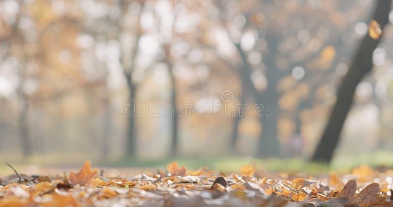 Close-up gevallen de herfst eiken bladeren in park stock foto