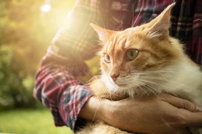 Close-up of Ginger domestic cat with long whiskers in young man arms stock image