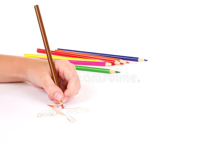 Close-up of girl drawing a bird stock image