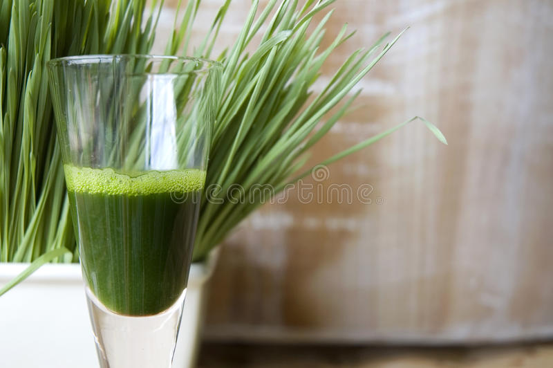 Close up glass of wheatgrass. Close up shot glass of wheatgrass juice with wheatgrass background royalty free stock photo
