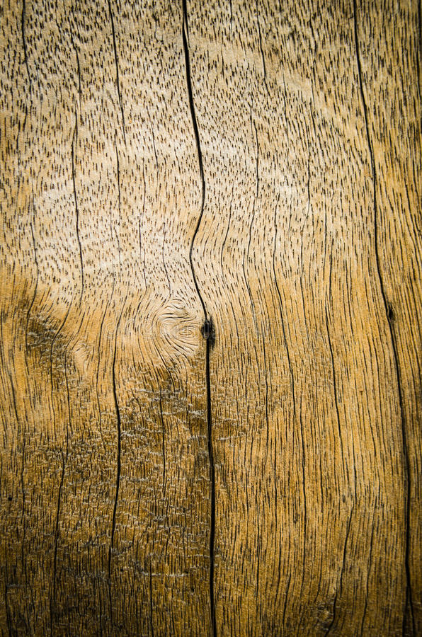 Download Close up of gnarl stock photo. Image of brown, floor - 26639224
