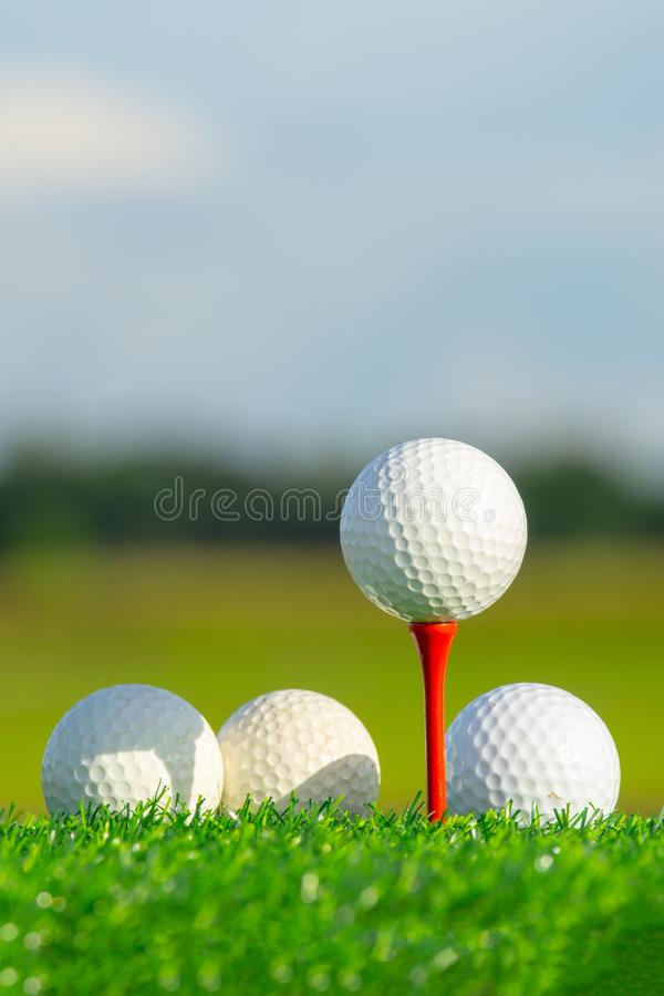 The golf ball on tee pegs ready to play and on green grass in the nature background. Close up the golf ball on tee pegs ready to play and on green grass in the stock photo