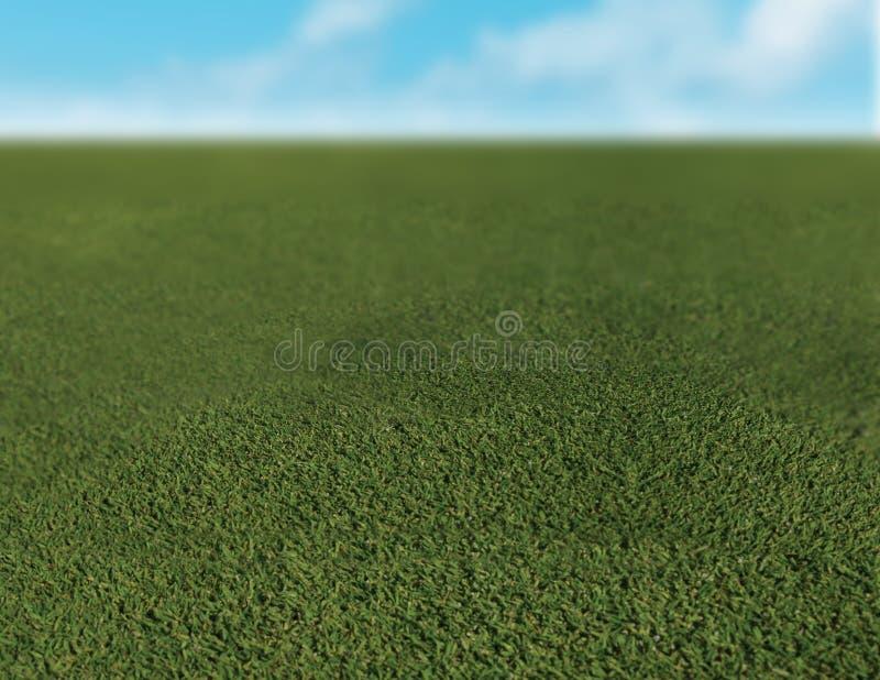 Close up of grass. Grass with bright blue sky