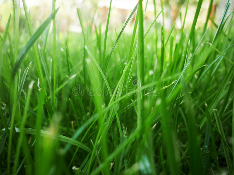Close-up of grass royalty free stock image