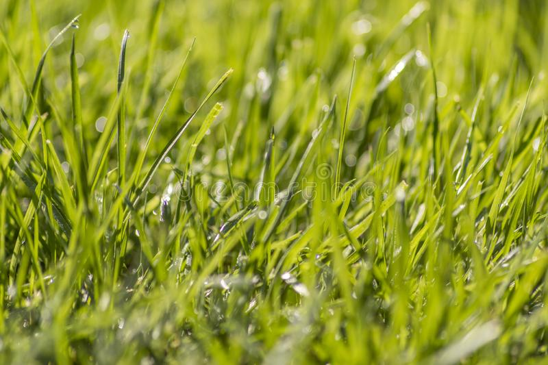 Close up of grass and dew. .Amazing Greece stock images