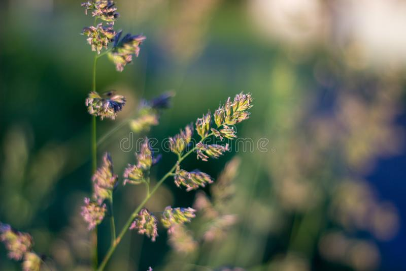 Close up of grass in the evening light. Aberdeen, Scotland stock image
