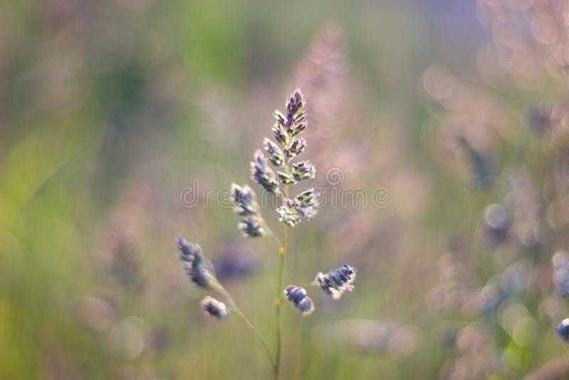 Close up of grass in the evening light. Aberdeen, Scotland stock images
