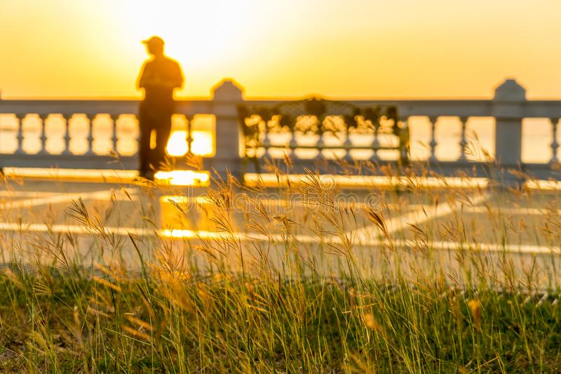 Close up of grass flower on sunset with blur of a man leaning against at the fence.  royalty free stock photo
