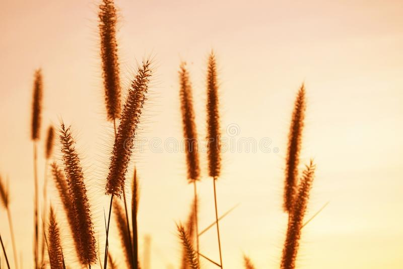 close up of grass flowers stock images