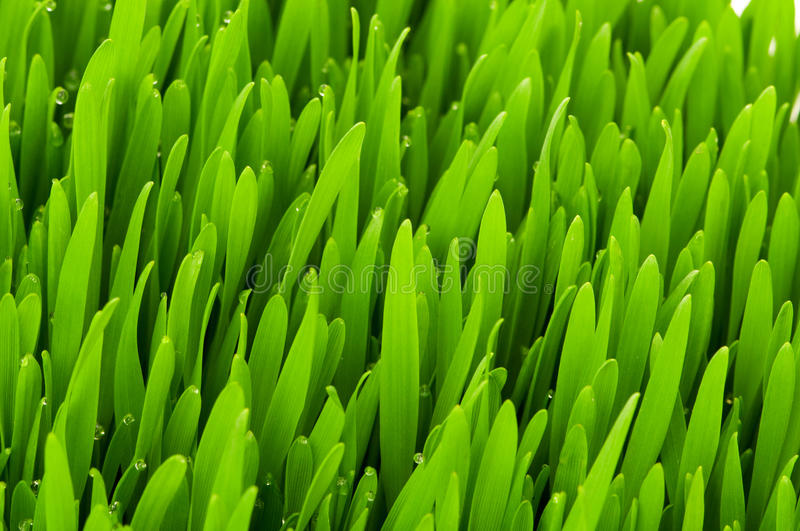 Close up of  grass on summer day