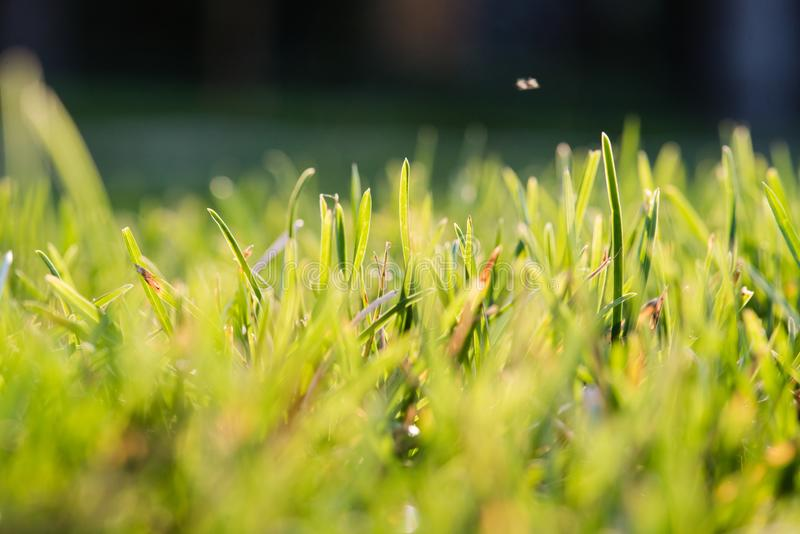 Close up grass in sun light. Close up of grass in sun light. Garden herb foliage stock photo
