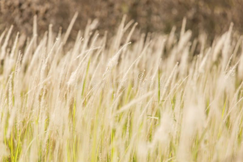 Close-up of grasses royalty free stock image