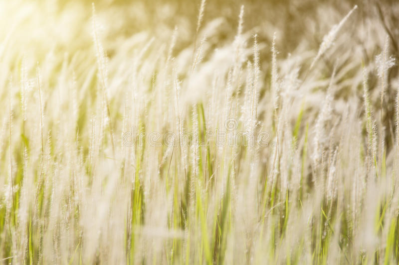 Close-up of grasses. It was taken at day royalty free stock images