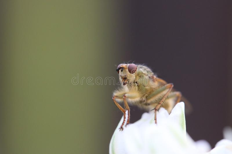 Download Close up of grasshopper stock image. Image of closeup - 82955991