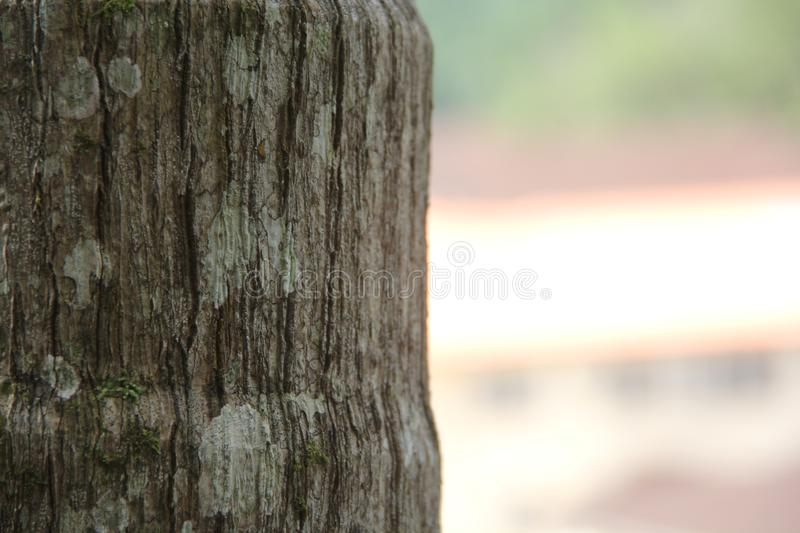 Close up on gray tree with parts of green moss stock photos