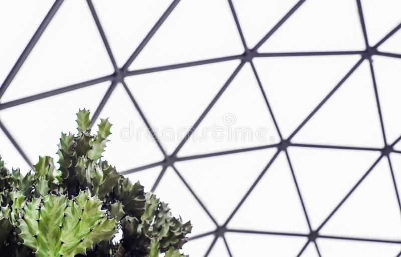 Close up of green agave cactus in the Geodesic Dome Glasshouse. Texture wallpaper background royalty free stock photo