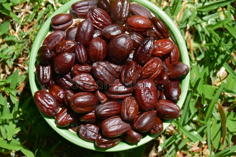 Jojoba seeds in a green bowl royalty free stock images