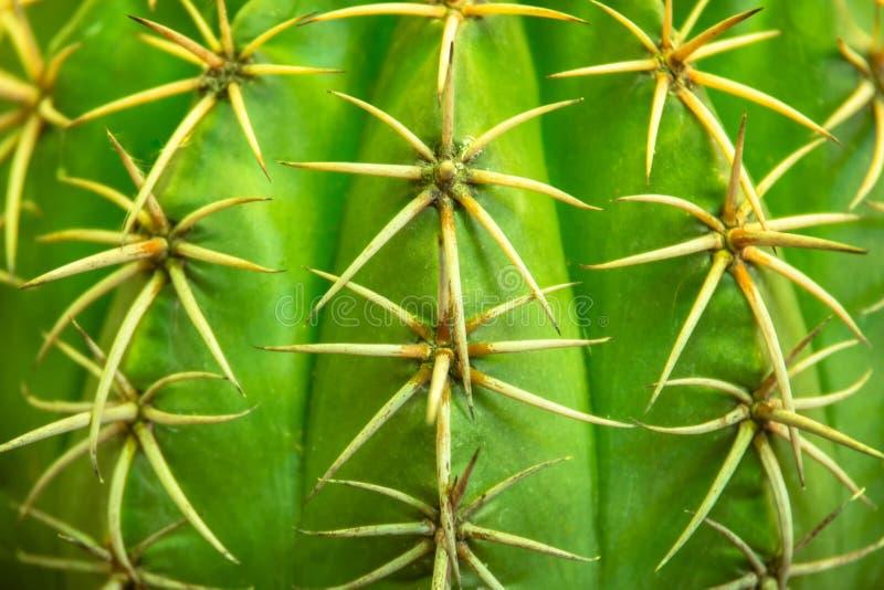 Green cactus in the garden stock photo