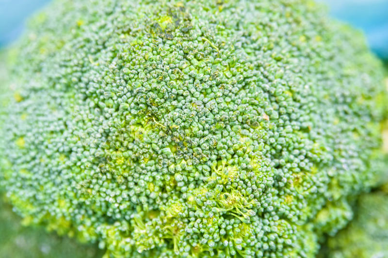 Close up green cauliflower royalty free stock image