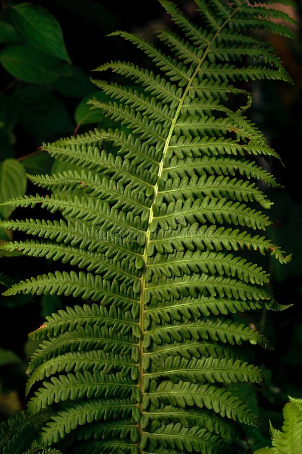 green fern leaf texture stock image