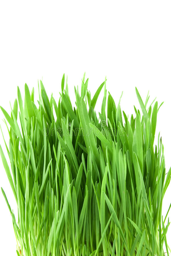 Download Close-up green grass stock image. Image of happy, backdrop - 13471225