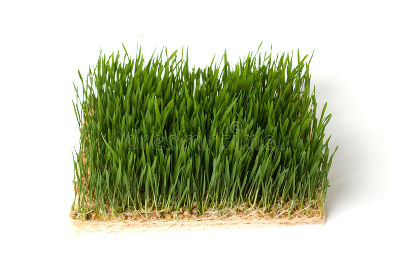 Download Close-up green grass stock image. Image of decor, grass - 13944633