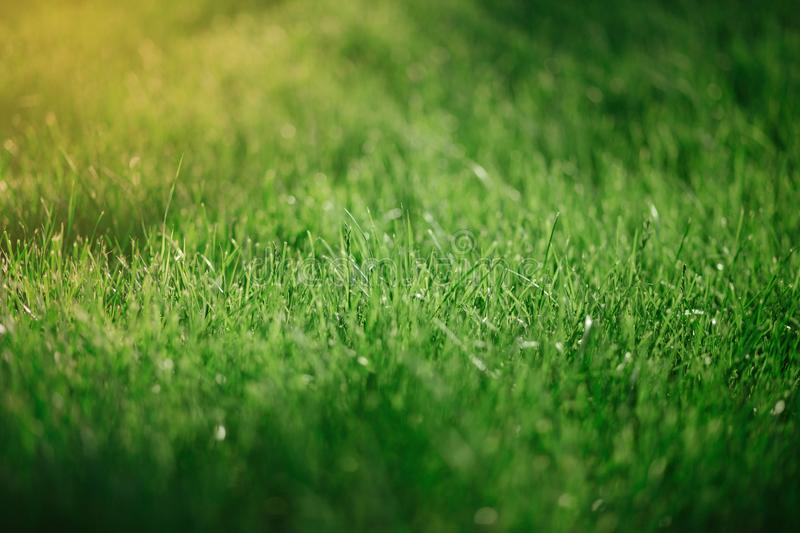 Close up green grass background. Summer concept, environment conversation royalty free stock images