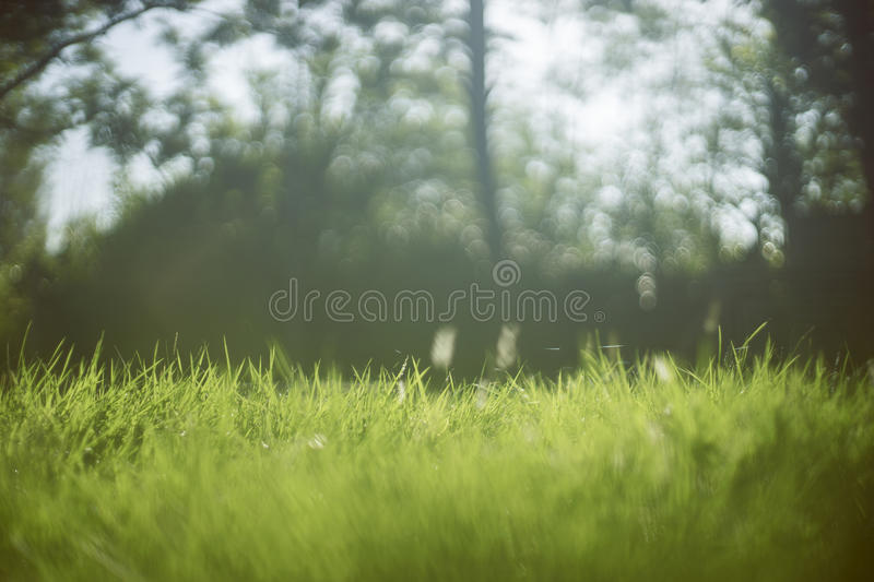 Close up green grass Beautiful nature background,selective focus ,blurred background, sunlight from natural,filtered image stock photo