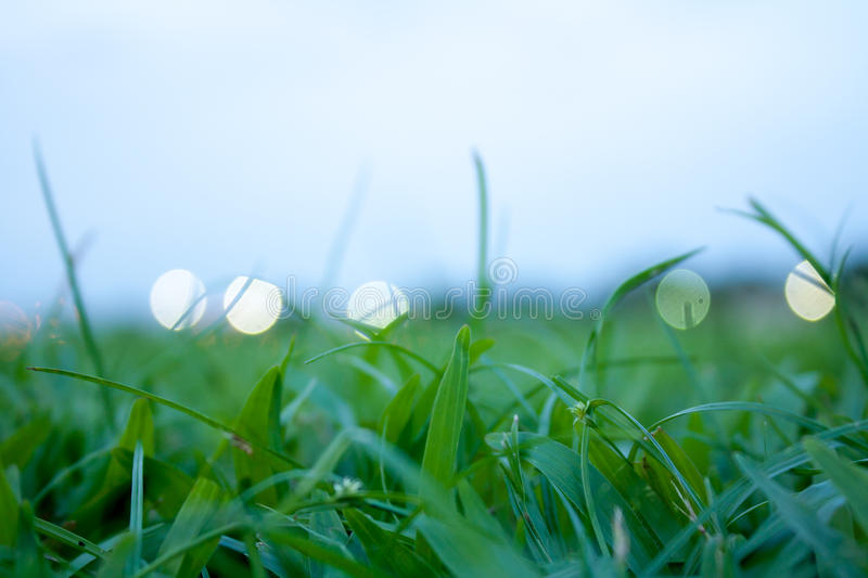 Close up of green grass in the field stock photo