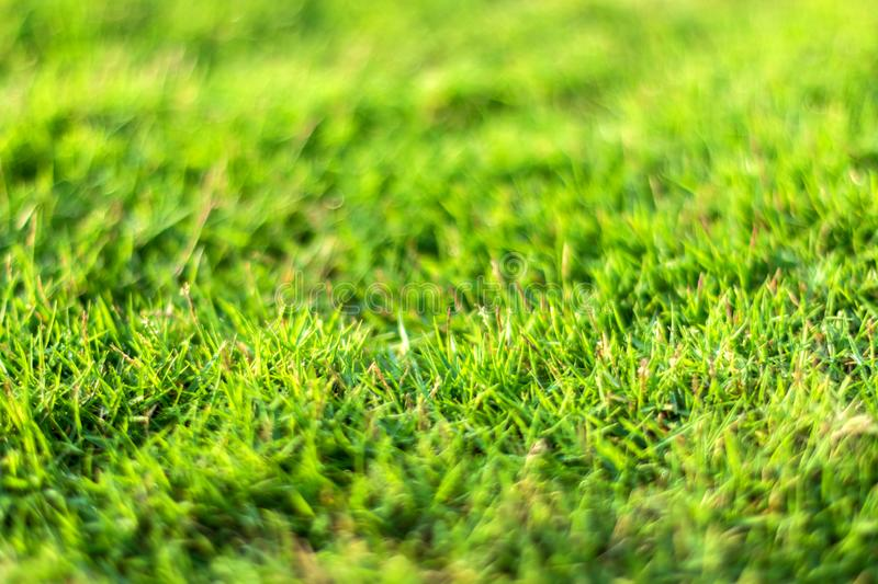 Close-up of Green Grass in A Natural Blurred Background stock photography