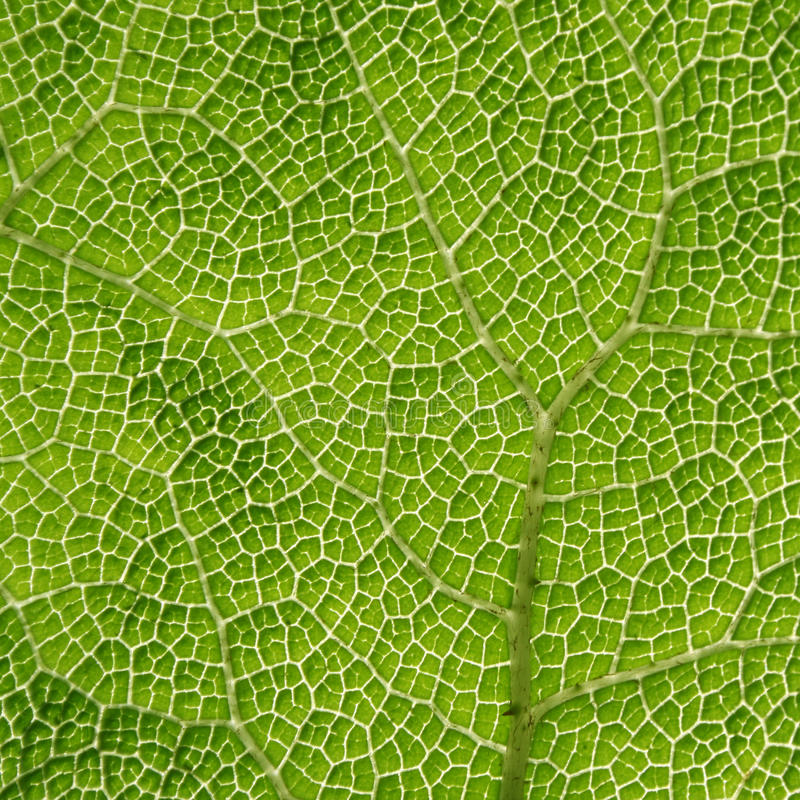 Close-up of a green leaf royalty free stock photos