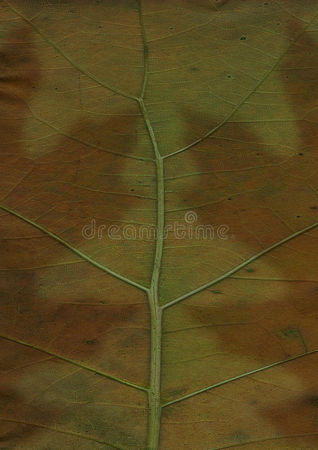 Close up green leaf background stock image