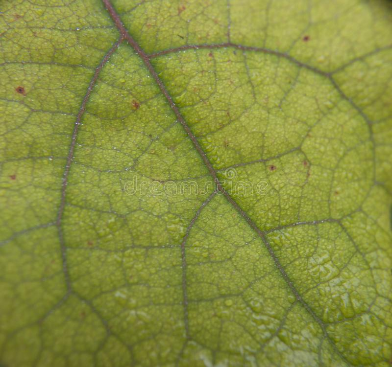 Close up, green leaf texture as green nature abstract background stock photos