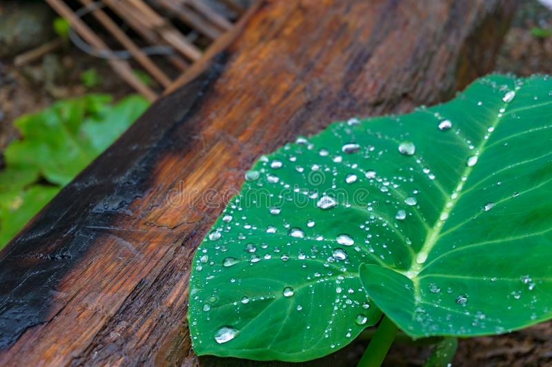 Close up of green leaf with log on the background stock photo