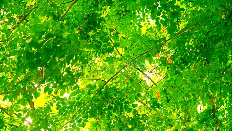 Close up green leaves macro photography. Texture background royalty free stock photos