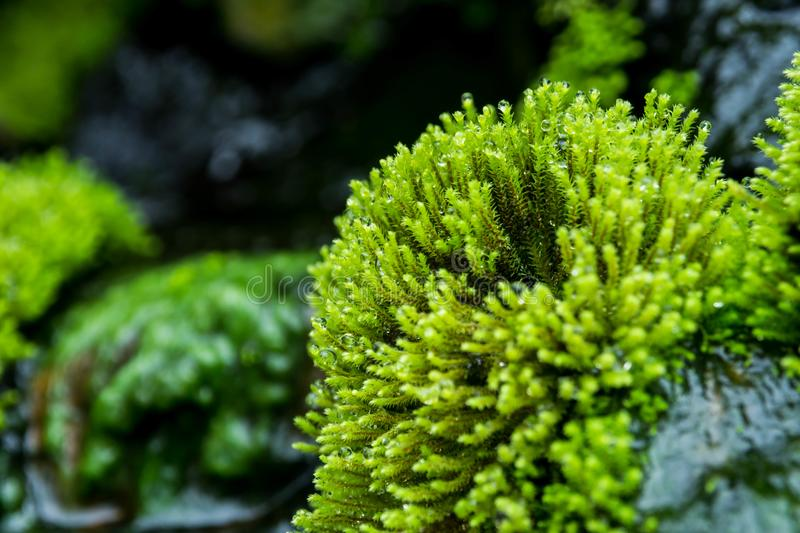 Close up green moss. stock photo