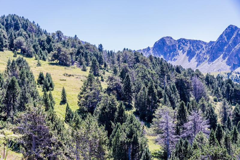 Close-up of green pine trees and sharp rocky peaks. Andorra Europe royalty free stock images