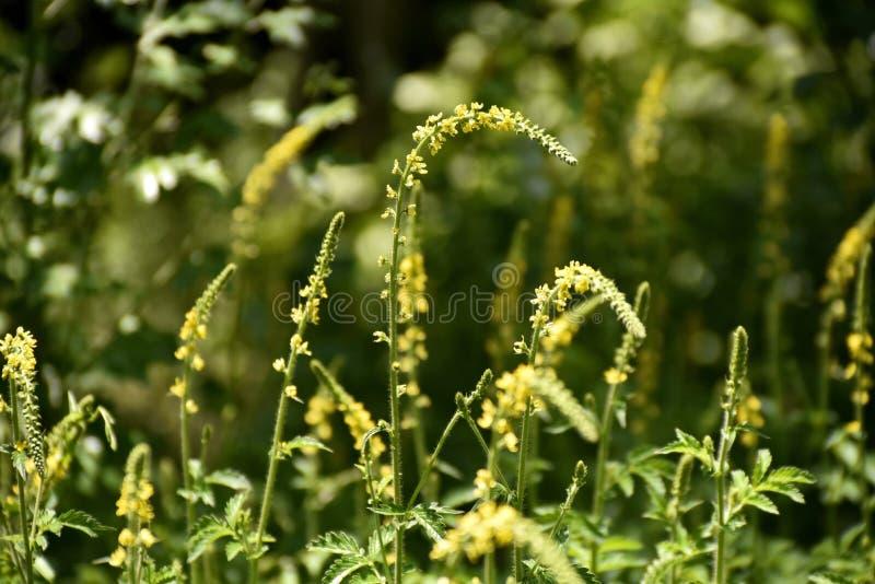 Close-up green plant at the garden near zayandeh rood, Isfahan, Iran.  royalty free stock photos