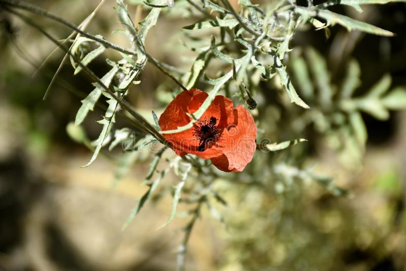 Close-up green plant at the garden near zayandeh rood, Isfahan, Iran.  stock image
