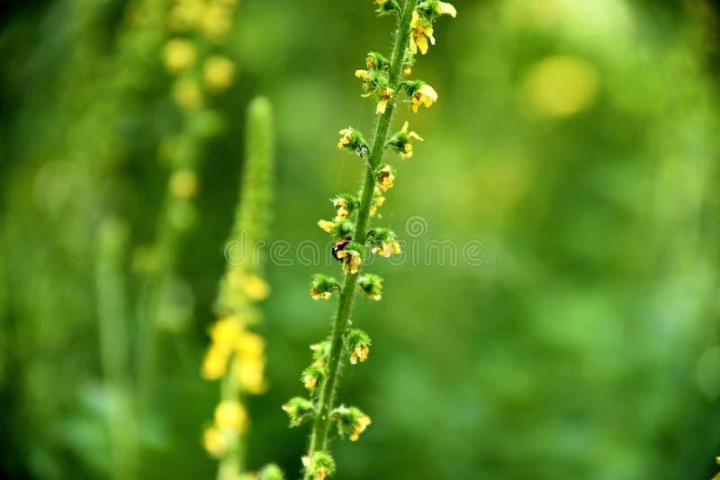 Close-up green plant at the garden near zayandeh rood, Isfahan, Iran.  royalty free stock image