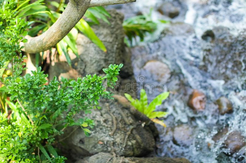 Close up green tropical plant with small leaves with blurred background of raging river or waterfall. stock photos