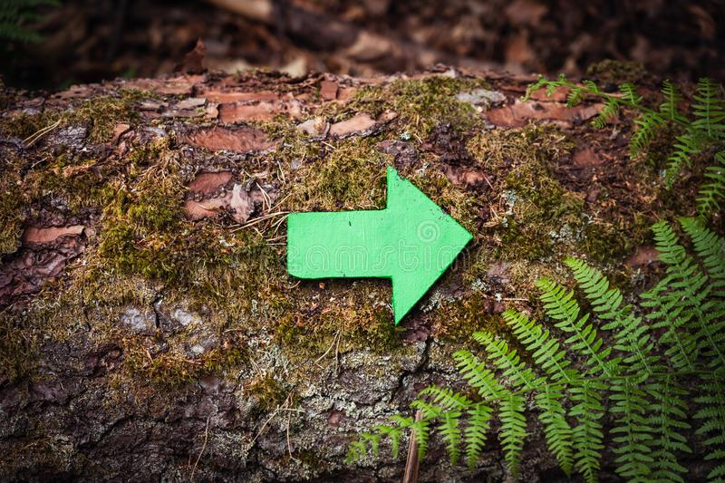 Close up green wooden arrow pointing the direction of the footpath or trail attached to an old tree with moss and fern around. stock photography