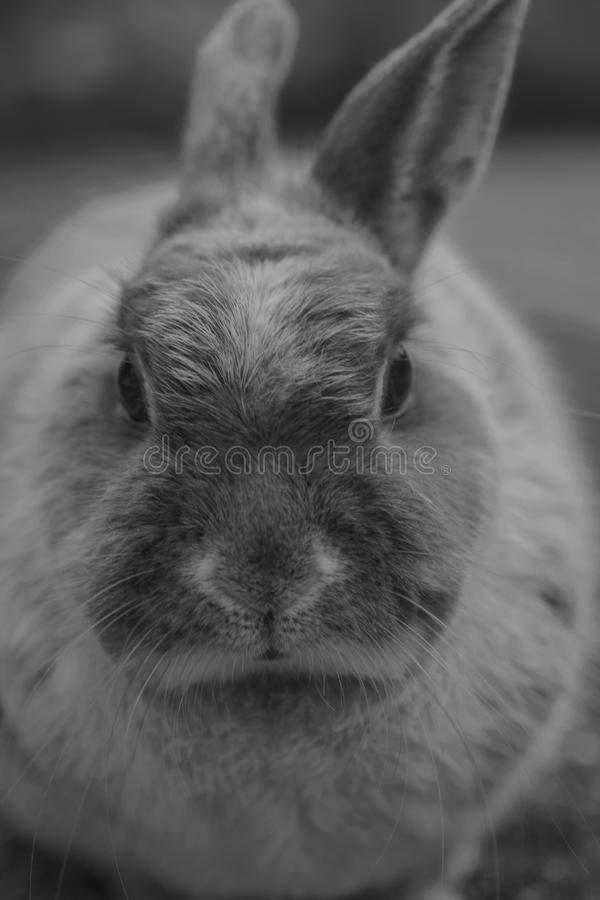 Cute close up of a bunny stock images