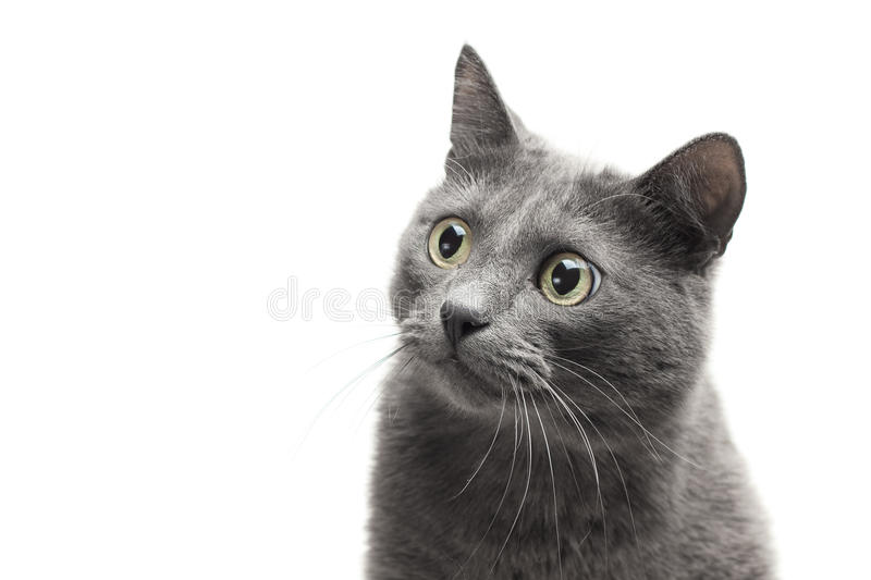 Close-up of a grey cat with funny expression stock photos
